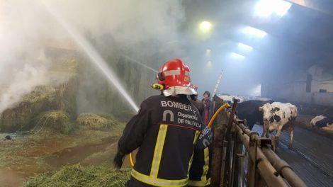 Los bomberos lanzan agua a las pacas de hierba, junto a las vacas.